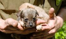 Жили в «собственных нечистотах»: у днепрянки отняли измученных животных