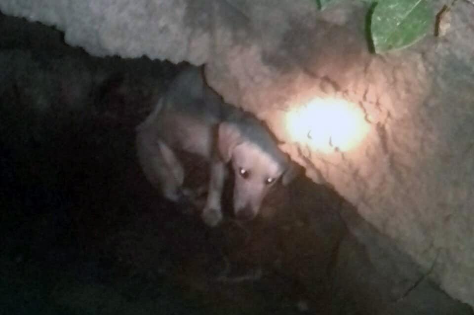 Спасатели Днепра достали собаку из глубокой ямы. Новости Днепра