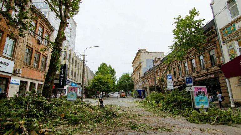 Днепряне требуют от властей оставить в покое деревья на улице Короленко. Новости Днепра