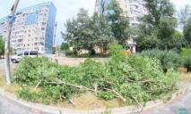 На ж/м Фрунзенском спилили деревья ради торгового центра. Люди перекрыли дорогу