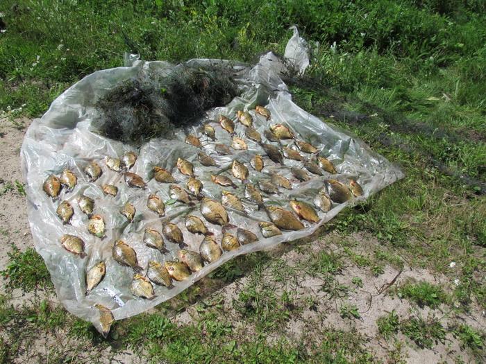 Убытки в более, чем 120 тысяч гривен за май: как браконьеры «разоряют» город. Новости Днепра