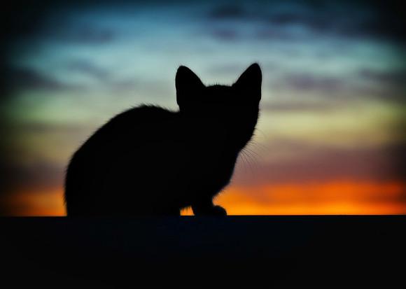 Мать выбросила кошку в окно на глазах у ребенка: животное не выжило. Новости Днепра