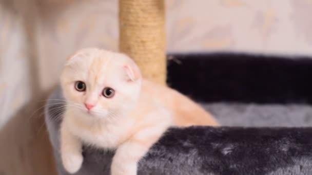 В Днепре спасатели разломали стену квартиры ради котенка. Новости Днепра