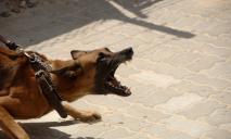 Уже есть жертвы: днепрянка выпускает «гулять» около детской площадки агрессивных собак без намордников