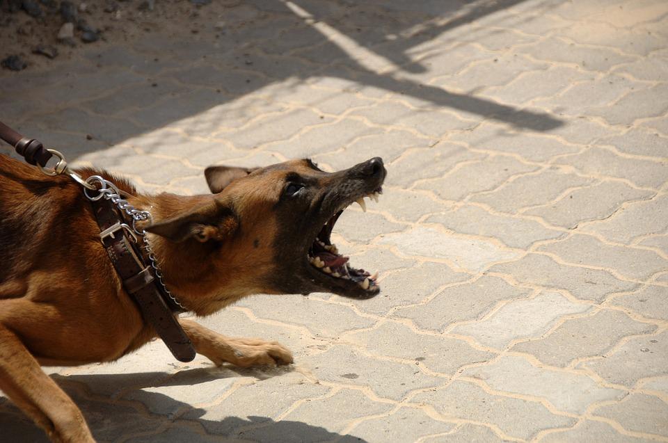 Уже есть жертвы: днепрянка выпускает «гулять» около детской площадки агрессивных собак без намордников. Новости Днепра