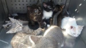 Бабушки заключили животных в тесные коробки. Новости Днепра