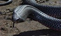 На Днепропетровщине змея заползла на территорию частного дома