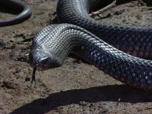 Змея пробралась в частный двор. Новости Днепропетровщины