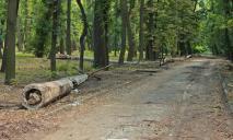 В Днепре преображается парк Гагарина