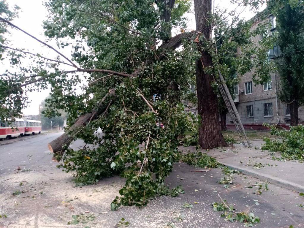 В Днепре упало дерево и заблокировало движение трамваев: подробности. Новости Днепра