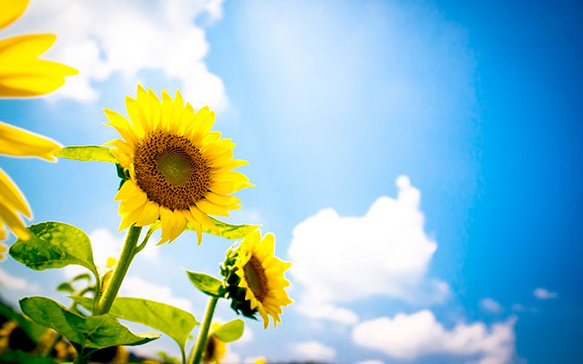 Погода на 22 июля: в Днепр возвращается жара. Новости Днепра