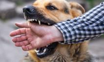 Стая бродячих собак насмерть закусала прохожего