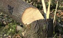 Мораторий о запрете на вырубку деревьев: в горсовете Днепра приняли решение