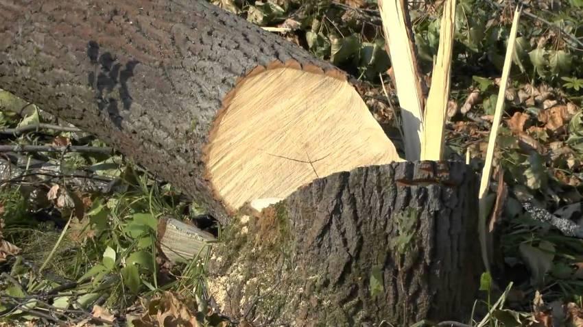 Мораторий о запрете на вырубку деревьев: в горсовете Днепра приняли решение. Новости Днепра