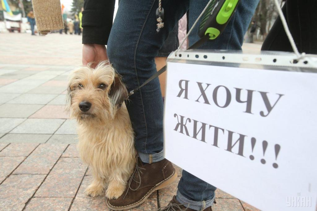 В Днепре пройдет масштабное шествие в защиту животных. Новости Днепра