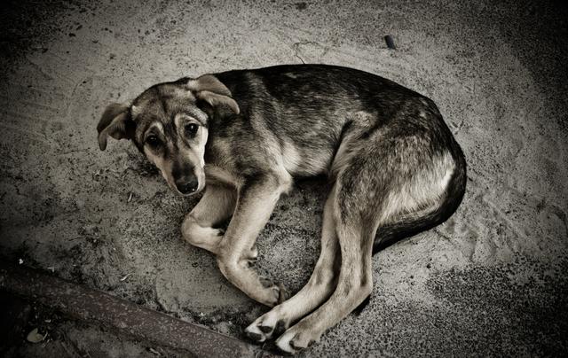 Бедный Боско: собаку на переходе сбила машина. Новости Днепра