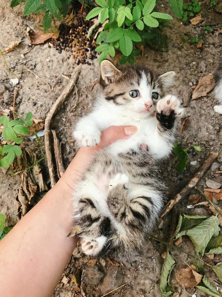 Новости Днепра про Живодеры Днепра: новыми жертвами стали крохотные котята