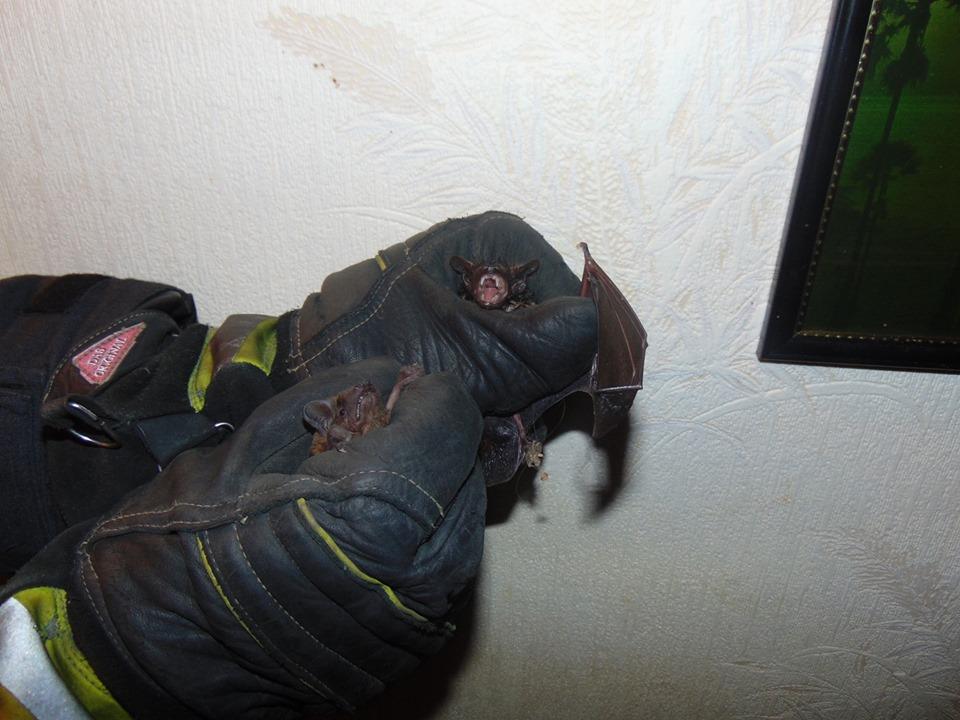 В квартире женщины поселилась целая стая летучих мышей. Новости Днепра