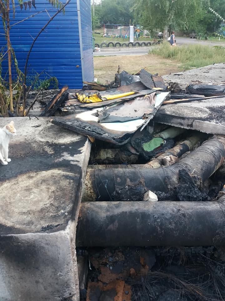 Сожгли котят заживо: шокирующие подробности издевательств над животными в Днепре. Новости Днепра