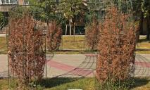 «Что-то пошло не так»: новый сквер в Днепре превратился «кладбище» для растений