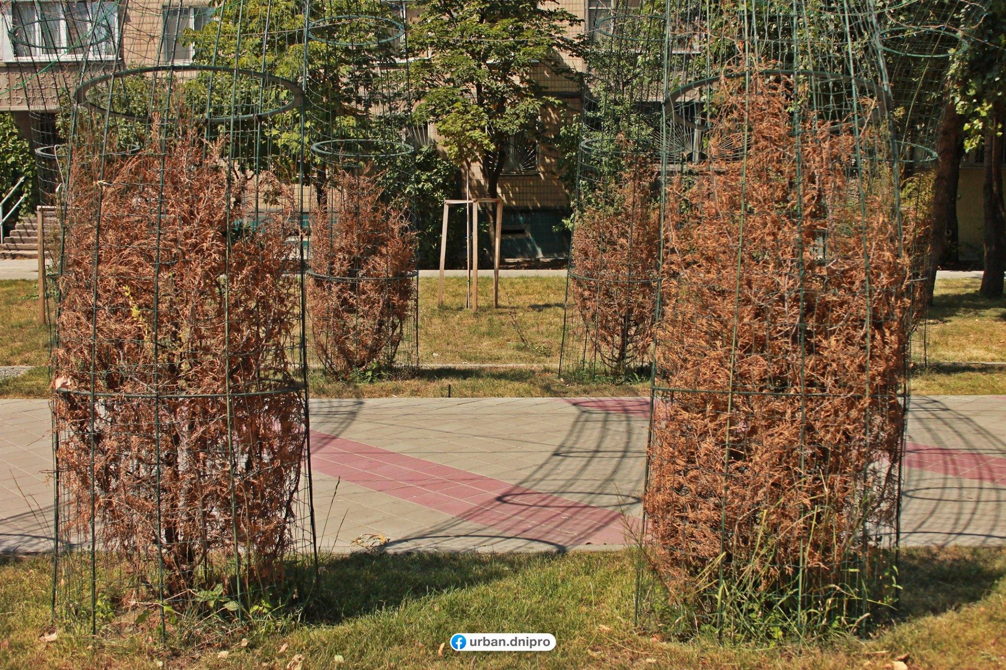 «Что-то пошло не так»: новый сквер в Днепре превратился «кладбище» для растений. Новости Днепра