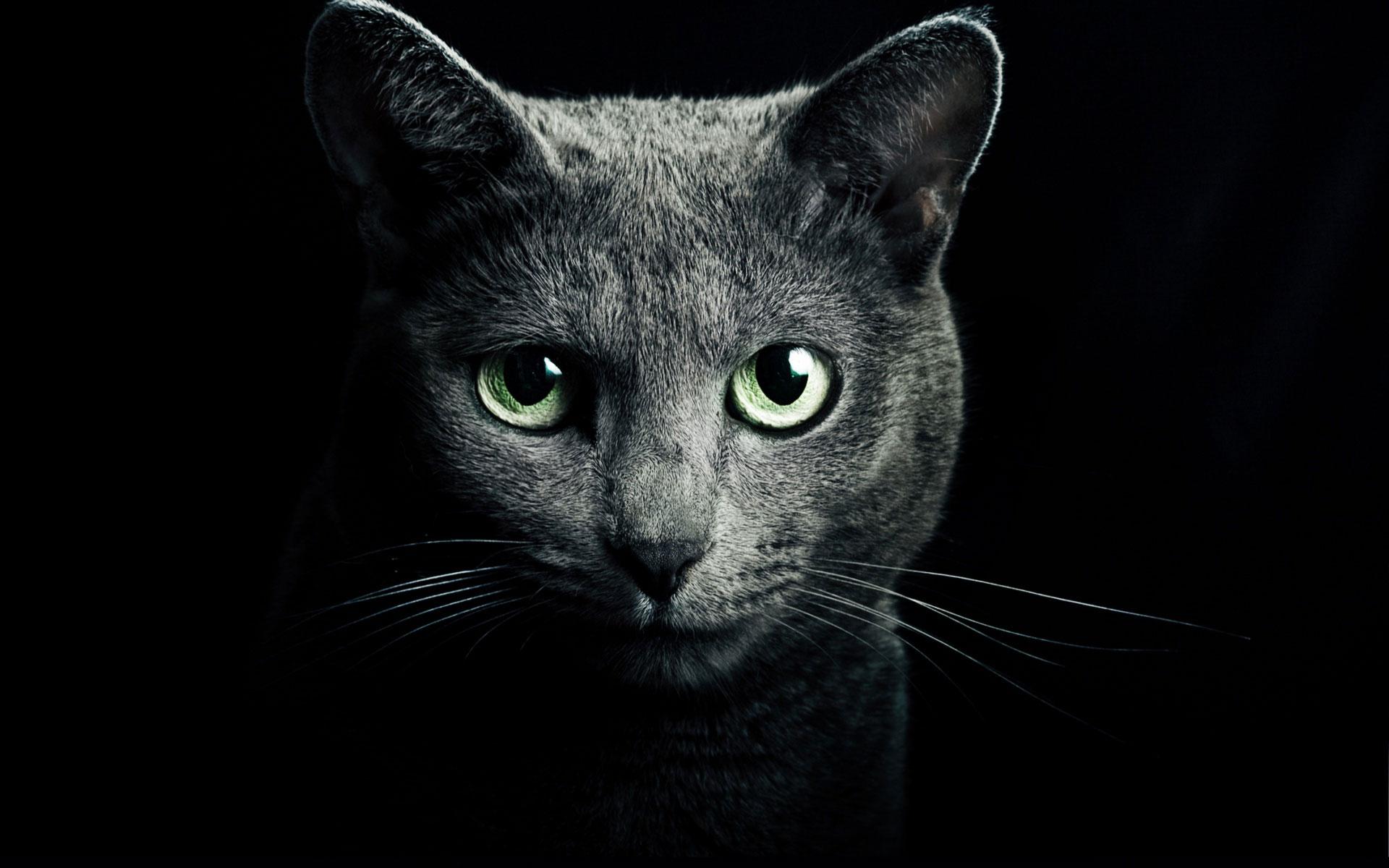Клонирование умершего кота: хозяин не смог расстаться с любимцем. Новости мира