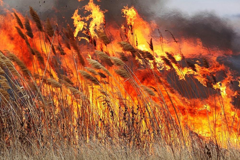 Новости Днепра про Сильный пожар в экосистеме: спасатели долго пытались затушить огонь