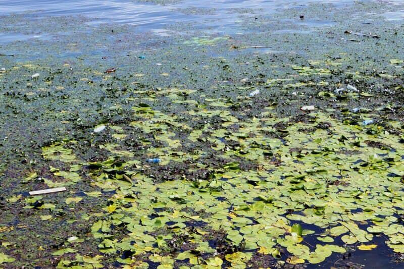 Чрезвычайная экологическая ситуация: Днепра тоже касается. Новости мира
