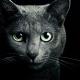 Клонирование умершего кота: хозяин не смог расстаться с любимцем