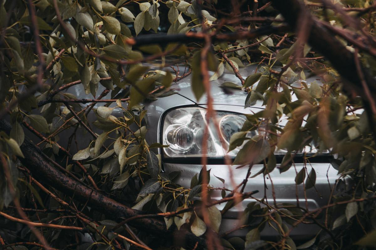 Непогода «наносит удар»: дерево упало на припаркованную машину. Новости Днепра