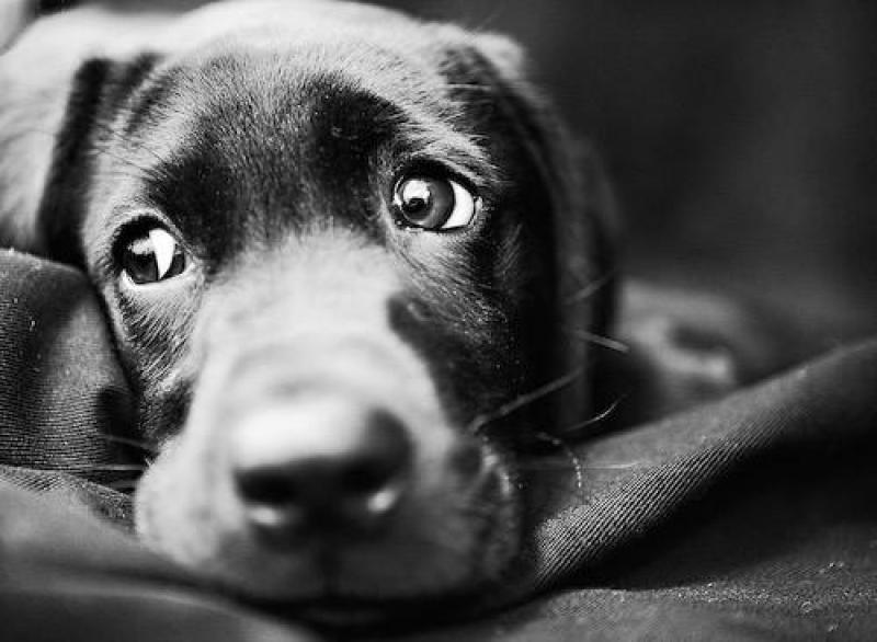 Отрезали уши и шкура: живодеры жестоко расправились с собакой. Новости Днепра