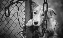 Неравная борьба: в Днепре люди засыпали нору щенков битым стеклом