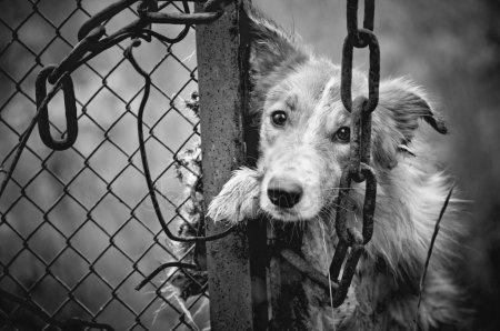 Неравная борьба: в Днепре люди засыпали нору щенков битым стеклом. Новости Днепра