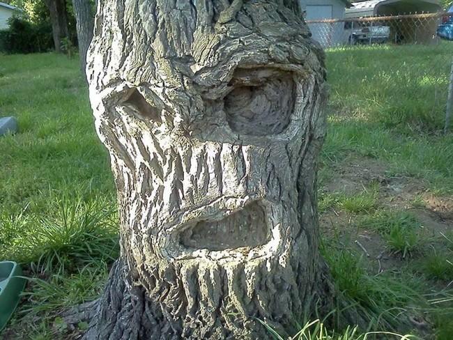 Месть природы человечеству: в Днепре засохшее дерево «отыгралось» на автомобиле. Новости Днепра