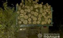 В Днепропетровской области работают «черные лесорубы»