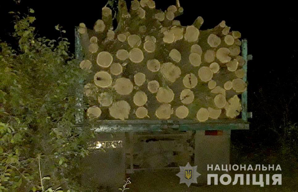 В Днепропетровской области работают «черные лесорубы» . Новости Днепра