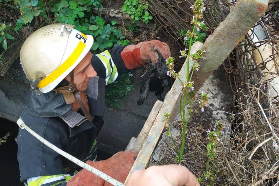 На выходные можно идти спокойно: сотрудники ГСЧС спасли двух щенков. Новости Днепра