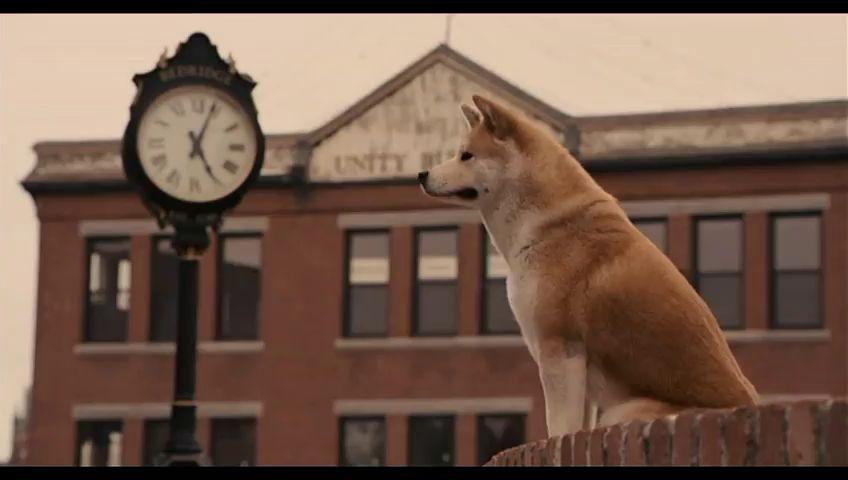 Преданность Хатико: пес два месяца ждет своего хозяина, который выкинул питомца прямо на обочину. Новости Днепра