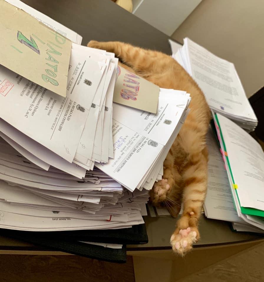 Рабочие будни главного кота горсовета. Новости Днепра
