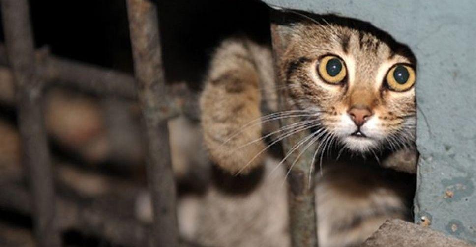 «Ну убили кота, бывает»: в Днепре жестоко отстреливают домашних животных. Новости Днепра