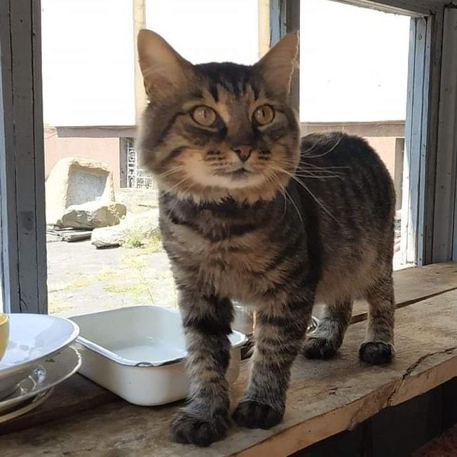 «Не всем же на диванах лежать», – в Днепре трудоустроили кота. Новости Днепра