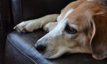 «Следующей жертвой может стать человек»: мужчина средь бела дня выстрелил в собаку