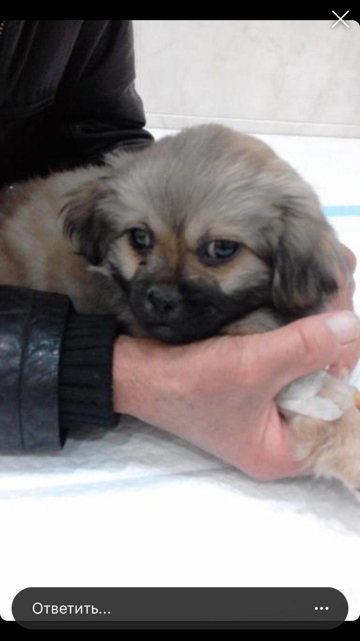 Собаку 80-летнего пенсионера сбили и скрылись, а дедушка отчаянно ищет раненого пса. Новости Днепра