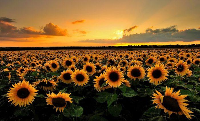 Погода в Днепре на 30 августа: жаркое лето не собирается отступать. Новости Днепра