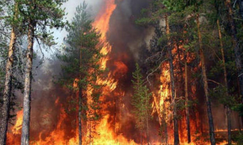 Высока пожарная опасность. Новости Днепра