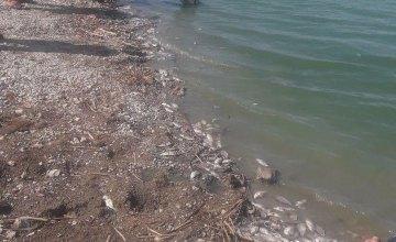 Под Днепром массово умирает рыба. Новости Днепра
