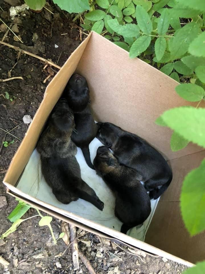 «Ничего нового»: в Днепре новорожденных щенков выбросили на помойку. Новости Днепра