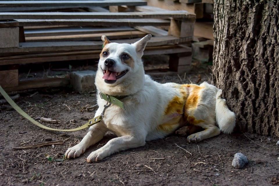 Нечеловеческая жестокость и чудесное спасение: женщина выходила избитую собаку. Новости Днепра