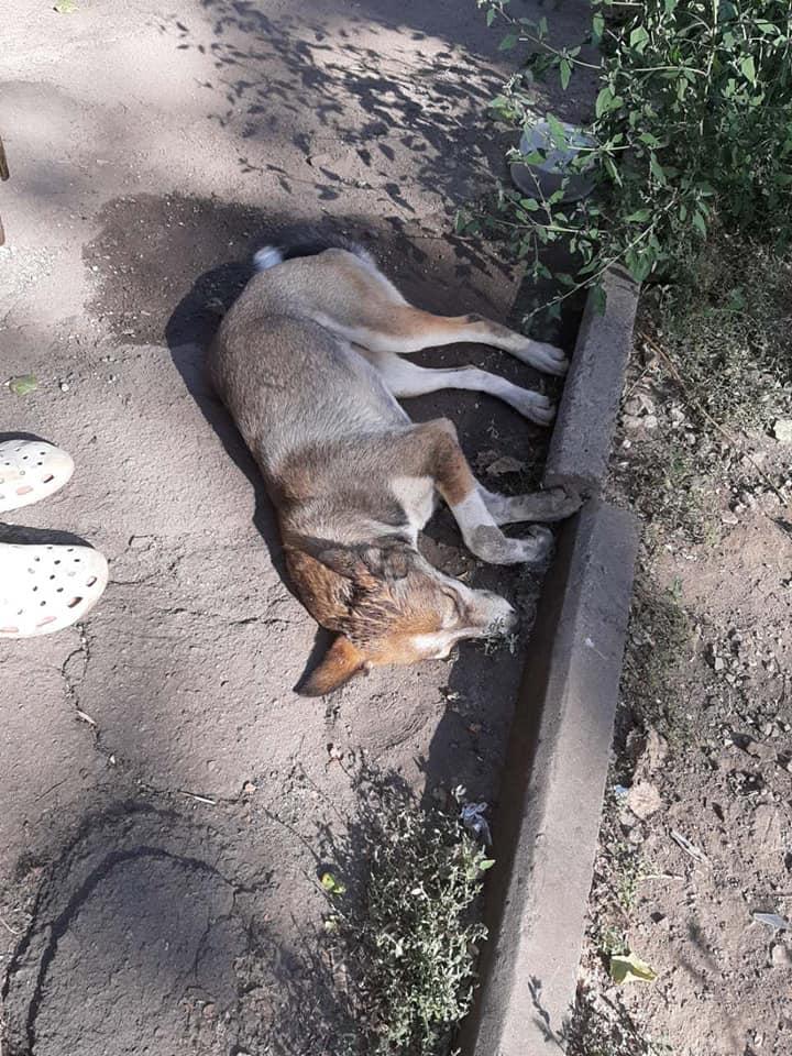 Маршрутчик сбил собаку. Новости Днепра