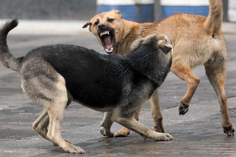 Собаки искусали людей. Новости Украины